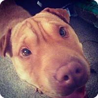 Adopt A Pet :: Kai in FL - Mira Loma, CA
