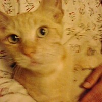 Adopt A Pet :: 6 boys - Redding, CA