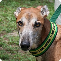 Adopt A Pet :: Kora - West Palm Beach, FL