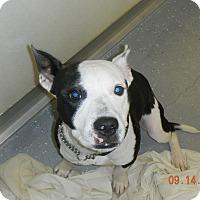 Adopt A Pet :: FELIX - Sandusky, OH