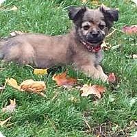 Adopt A Pet :: Santa - Marlton, NJ
