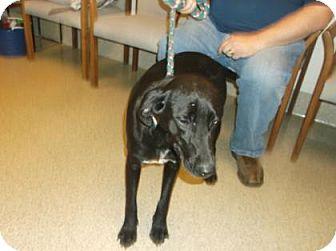 Labrador Retriever Mix Dog for adoption in Gloucester, Virginia - RAVEN