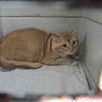 Adopt A Pet :: A004694 - Arcadia, FL