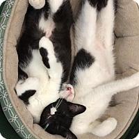 Adopt A Pet :: Pip & Wobbles - Portland, IN