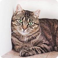 Adopt A Pet :: Nico - Naugatuck, CT