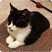 Adopt A Pet :: Ethan - Alexandria, VA