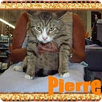 Adopt A Pet :: Pierre - Jacksonville, FL