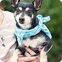 Adopt A Pet :: Brewster - Kingwood, TX