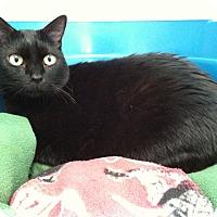 Adopt A Pet :: Catherine - Newport Beach, CA