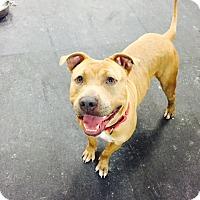 Adopt A Pet :: Tongo - Jupiter, FL