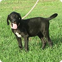 Adopt A Pet :: Grant - Salem, NH