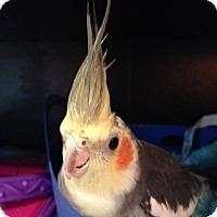 Adopt A Pet :: Matt - St. Louis, MO