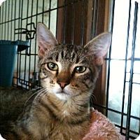Adopt A Pet :: Iggy - Madisonville, LA