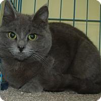 Adopt A Pet :: DIGIT - Acme, PA