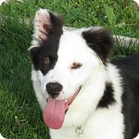 Adopt A Pet :: HANK **adoption pending!** - Nampa, ID