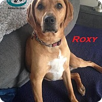 Adopt A Pet :: Roxy - Adopted June 2016 - Huntsville, ON