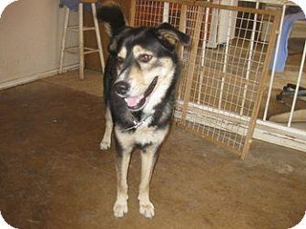 Husky Mix Dog for adoption in San Antonio, Texas - Seth