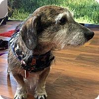 Adopt A Pet :: Thomas - Toronto, ON