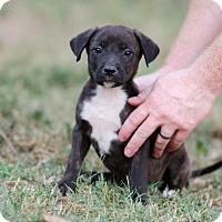 Adopt A Pet :: Ryder $250 - Seneca, SC