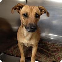 Adopt A Pet :: Susie Q - Albemarle, NC