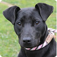 Adopt A Pet :: AUDREY/Low Fees, Altered - Red Bluff, CA