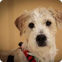 Adopt A Pet :: Wesley - Westminster, MD