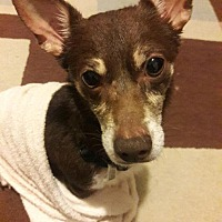 Adopt A Pet :: Chase - Houston, TX