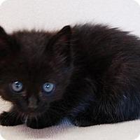 Adopt A Pet :: Juan - Toccoa, GA