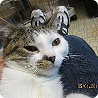 Adopt A Pet :: Kara - Sterling Hgts, MI