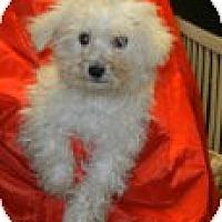Adopt A Pet :: Bramley - Antioch, IL