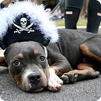 Adopt A Pet :: JUNIOR - MILWAUKEE, WI