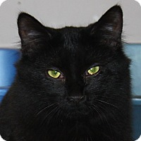 Adopt A Pet :: Nettle - North Branford, CT