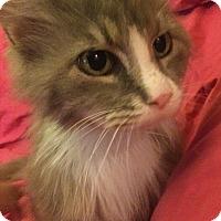 Adopt A Pet :: Hannah - Rochester, MI