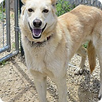 Adopt A Pet :: Cody - Meridian, ID
