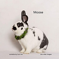 Other/Unknown Mix for adoption in Jurupa Valley, California - Moose