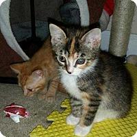 Adopt A Pet :: Maddie - Dawson, GA