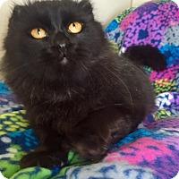 Adopt A Pet :: Silver - Bloomsburg, PA