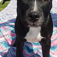 Adopt A Pet :: Roxie - Detroit, MI