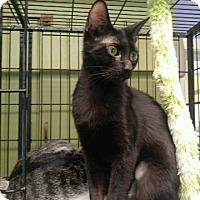 Adopt A Pet :: LICORICE - Cleveland, TN