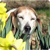 Adopt A Pet :: Delta - Indianapolis, IN