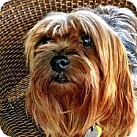 Adopt A Pet :: Stella - Gulfport, FL