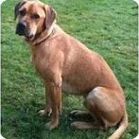 Adopt A Pet :: Gordon - Seattle, WA