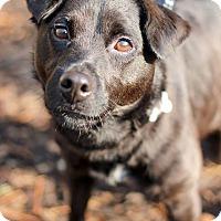 Adopt A Pet :: Stitch - Tinton Falls, NJ