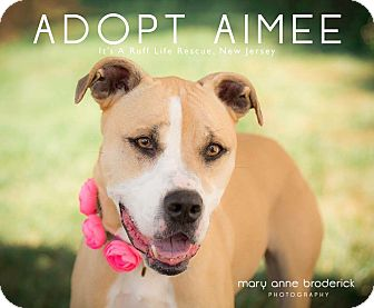 American Staffordshire Terrier/Boxer Mix Dog for adoption in West Grove, Pennsylvania - Aimee