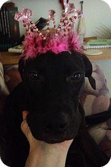 Labrador Retriever Dog for adoption in Cleveland, Texas - Thelma