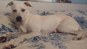Labrador Retriever Mix Dog for adoption in Beaumont, Texas - MEG