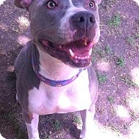 Adopt A Pet :: PENNY - Ojai, CA