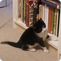 Adopt A Pet :: Shamrock - Covington, KY