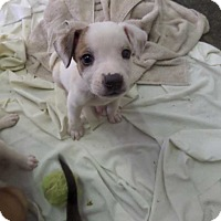 Adopt A Pet :: Thor - Hardeeville, SC