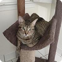 Adopt A Pet :: Dexter Bonded Trio - Atlanta, GA